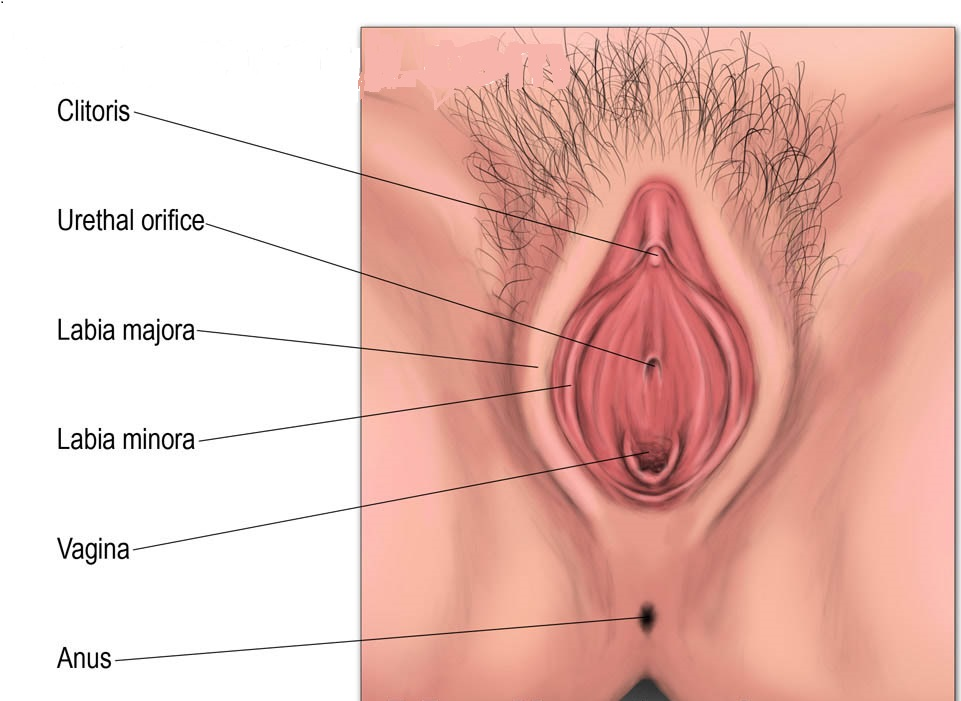 normal vulva photos